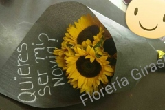 REP-5 $320.00 C/6 GIRASOLES